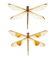 Watercolor dragonflies vector image