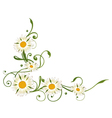 Marguerite daisy vector image vector image