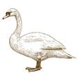 etching swan vector image