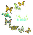 composition with butterflies vector image