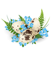 Easter Quail Eggs vector image