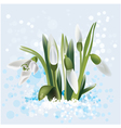 snowdrop in snow vector image