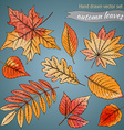 Botanical set highly detailed hand drawn leaves vector image