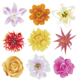 collection of colorful flowers vector image