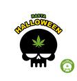 Skull with marijuana cannabis Rasta Halloween vector image