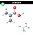 Alanine chemical structure and model