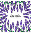 lavender drawing frame isolated wild vector image