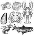 set of hand drawn seafood design elements for vector image