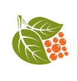 Two spring leaves with orange seeds simple icon vector image