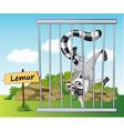 Cartoon Zoo Lemur vector image