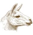 engraving lama vector image