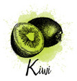 kiwi in hand drawn graphics vector image