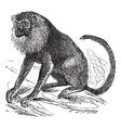 Ursine Howler vintage engraving vector image vector image