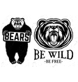 Bears logo vector image