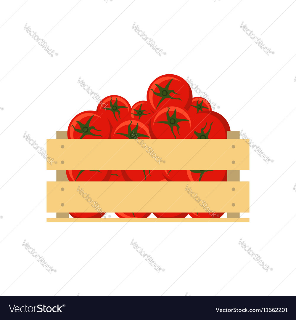 Fresh tomatoes in wooden crate isolated on white vector