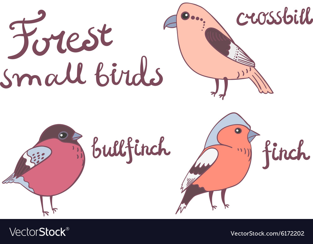 Forest little birds collection vector