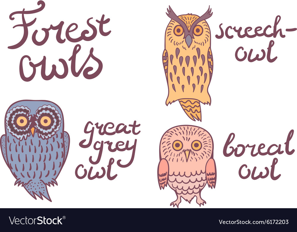 Forest owls collection vector