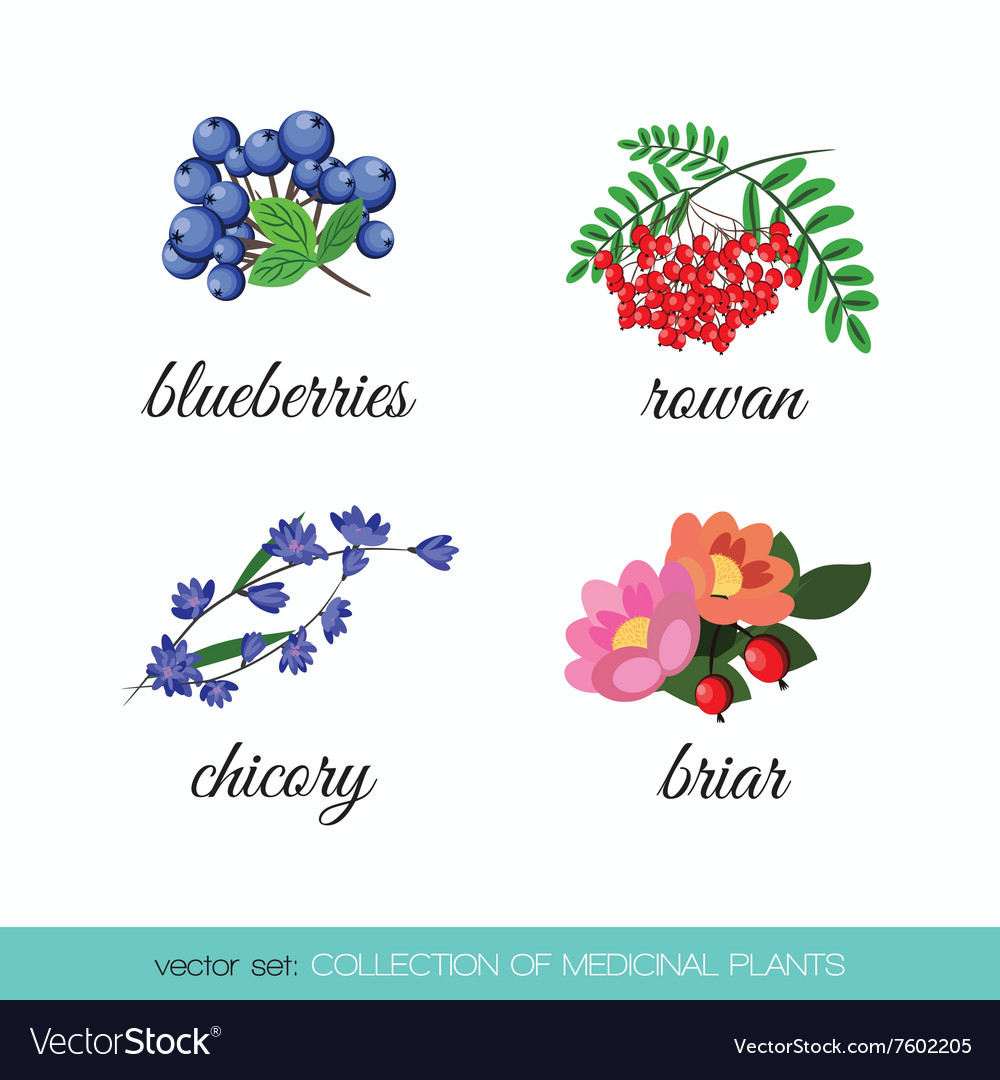 Collection of medicinal plants2 vector