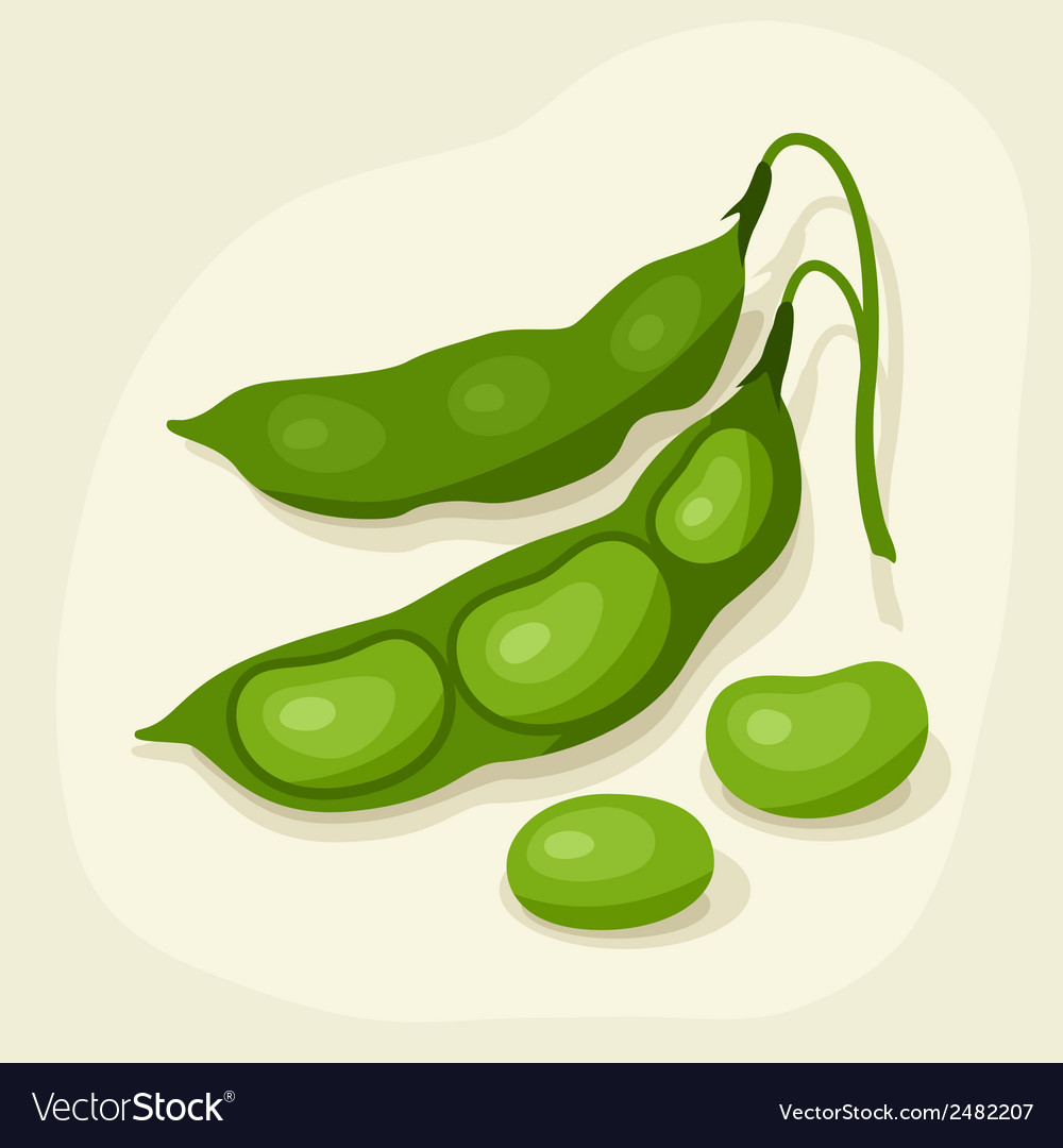 Stylized of fresh ripe bean pods vector