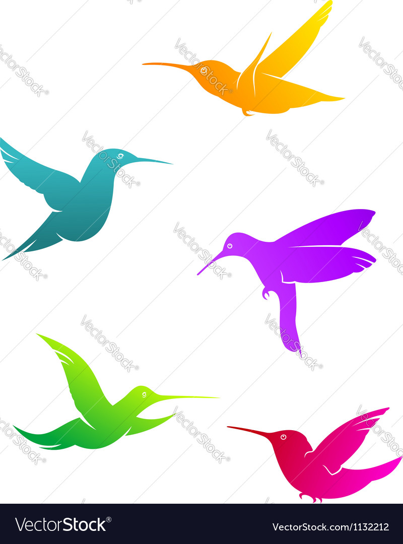 Colorful flying hummingbirds vector
