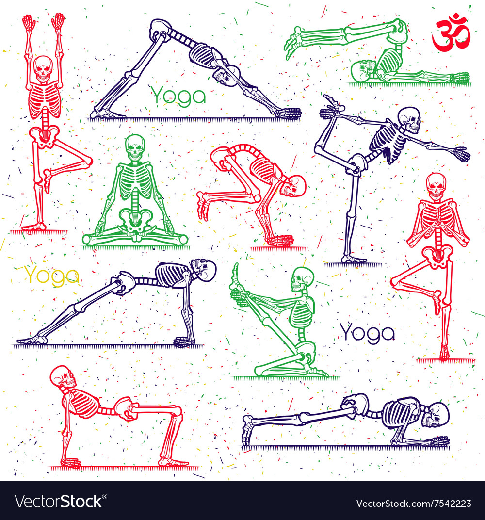 Skeleton practicing yoga vector