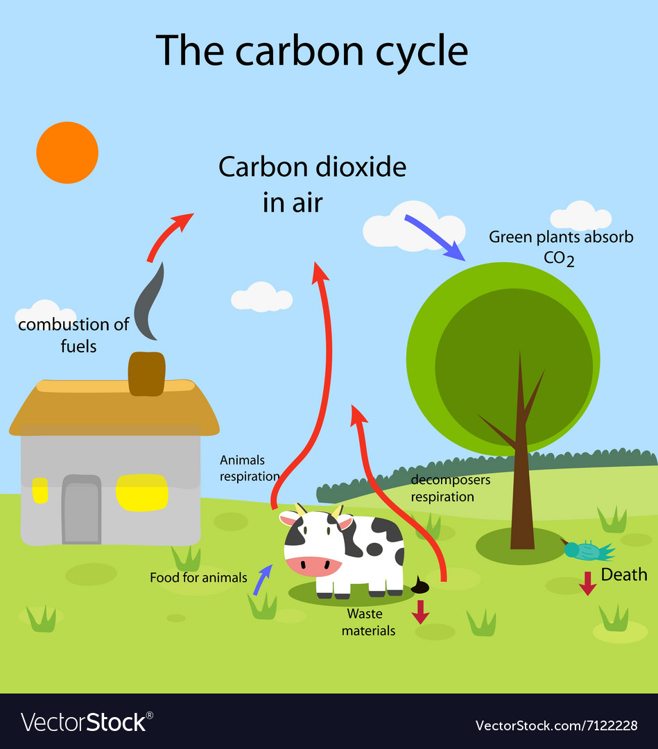 Carbon cycle vector