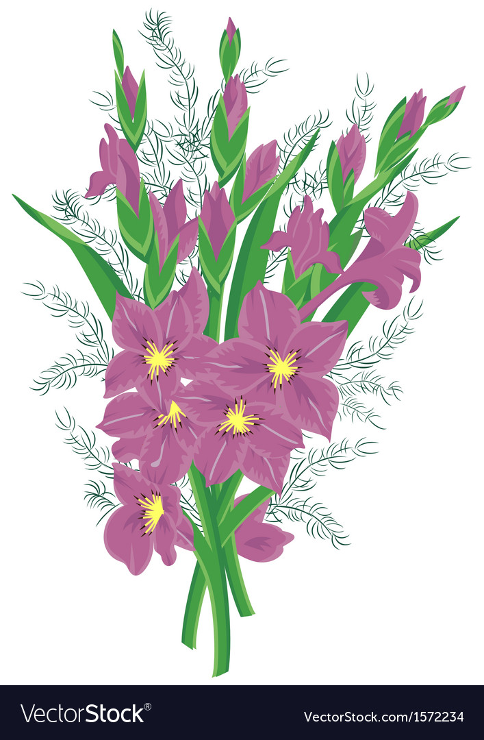 Bouquet of lilac gladioluses vector