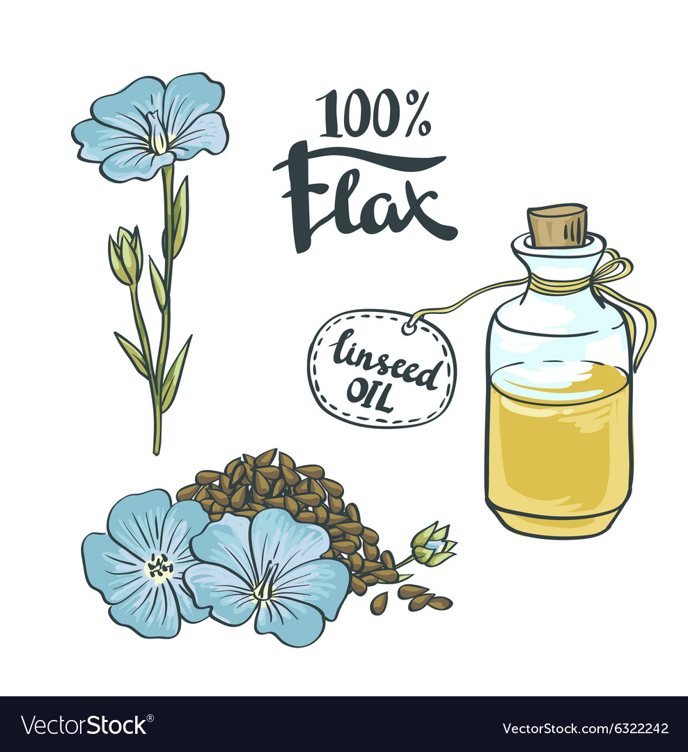 Flax seeds oil in a glass bottle with flowers vector