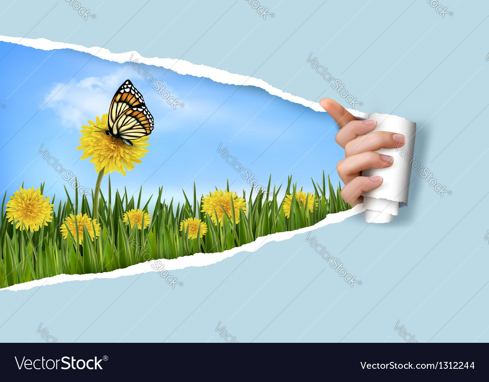 Ripped paper background with dandelions field a vector