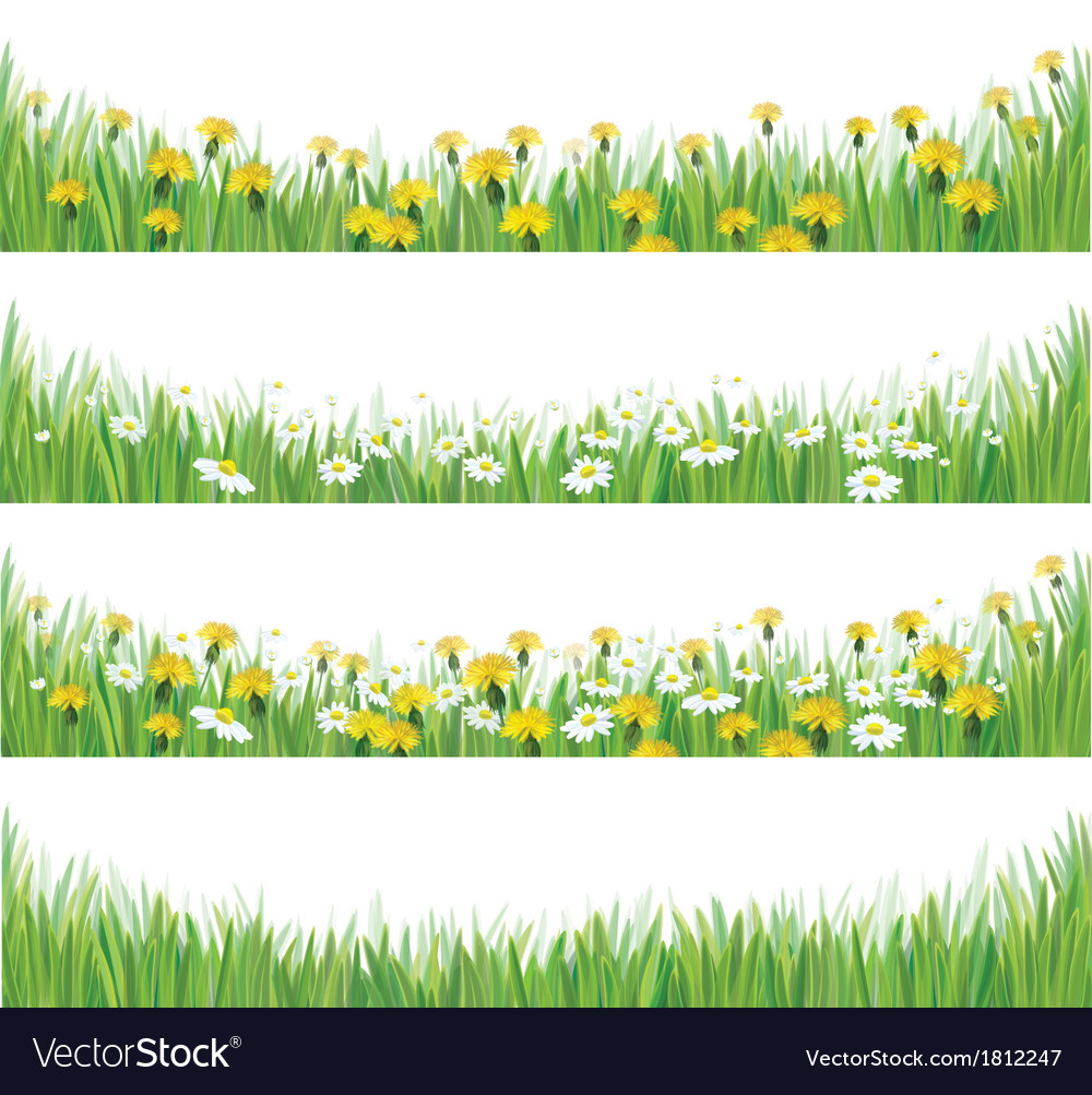 Grass flowers isolated vector
