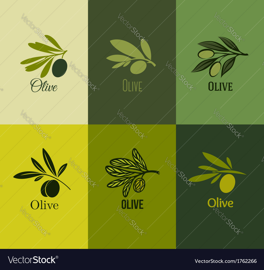 Olive branch set of labels vector