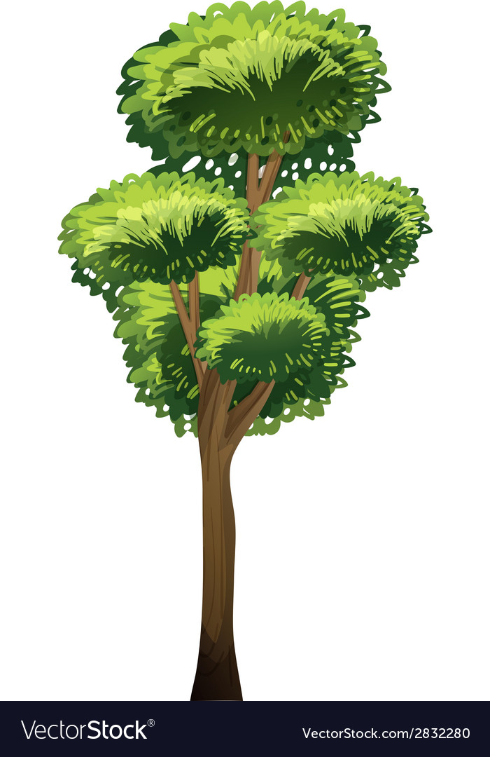 A tall tree vector