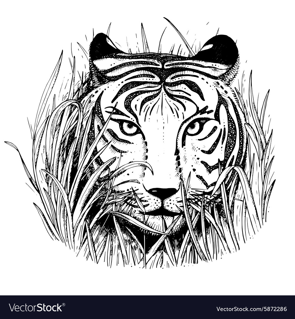 Black and white sketch of a tigers face vector