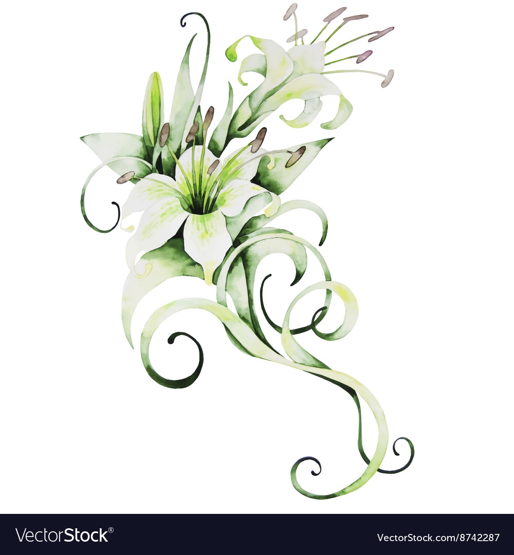 Watercolor white lilies vector