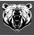 Bear face vector image