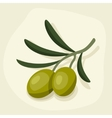Stylized of fresh ripe olive branch vector image vector image