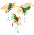 Bird of paradise set vector image