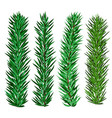 set of spruce and fir tree branches - christmas vector image