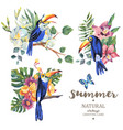 set of vintage summer toucan butterflies vector image