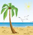 Palm tree on sand beach vector image