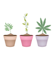 Shampoo Ginger Cardamom and Cannabis Plant in Pot vector image