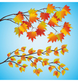 Set of autumn tree vector image vector image
