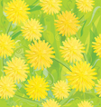 seamless pattern of yellow dandelions vector image vector image