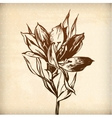 decorative plant lily vector image