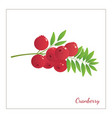 ranberry vector image