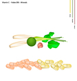 Thai Herbs with Vitamin C B9 and Minerals vector image
