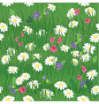 Seamless pattern - texture of grass and wild flowe vector image