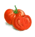 drawing tomato with slice vector image