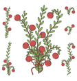 Colored with branches of cranberries vector image