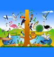 bird kingdom vector image vector image